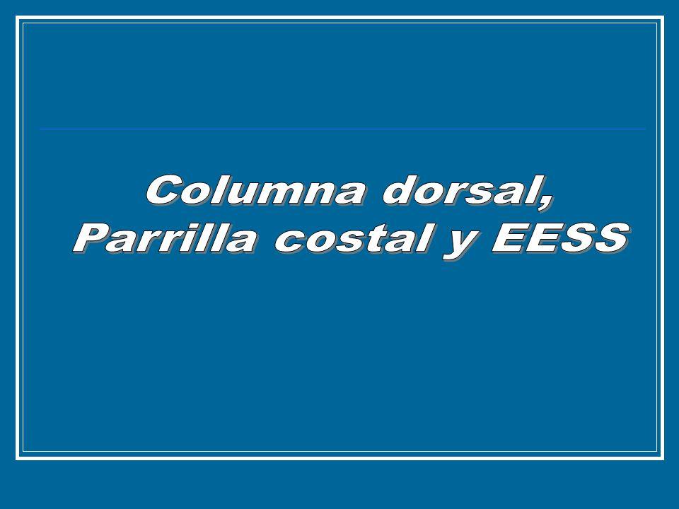 Columna dorsal, Parrilla costal y EESS