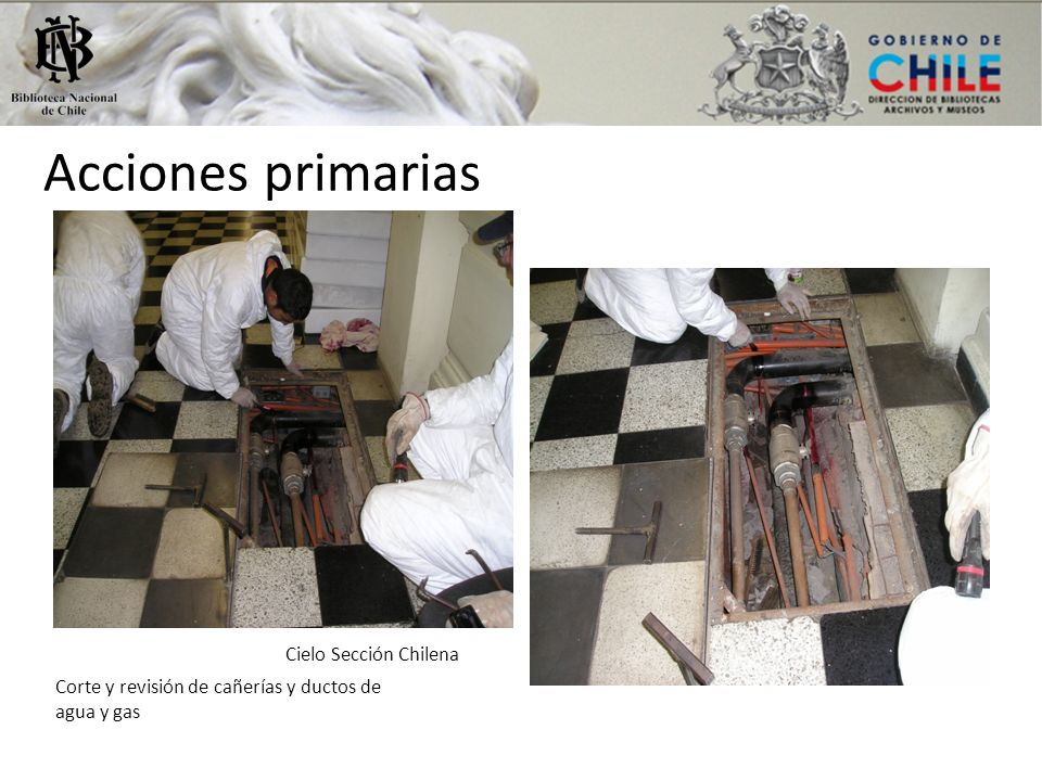 Acciones primarias Cielo Sección Chilena