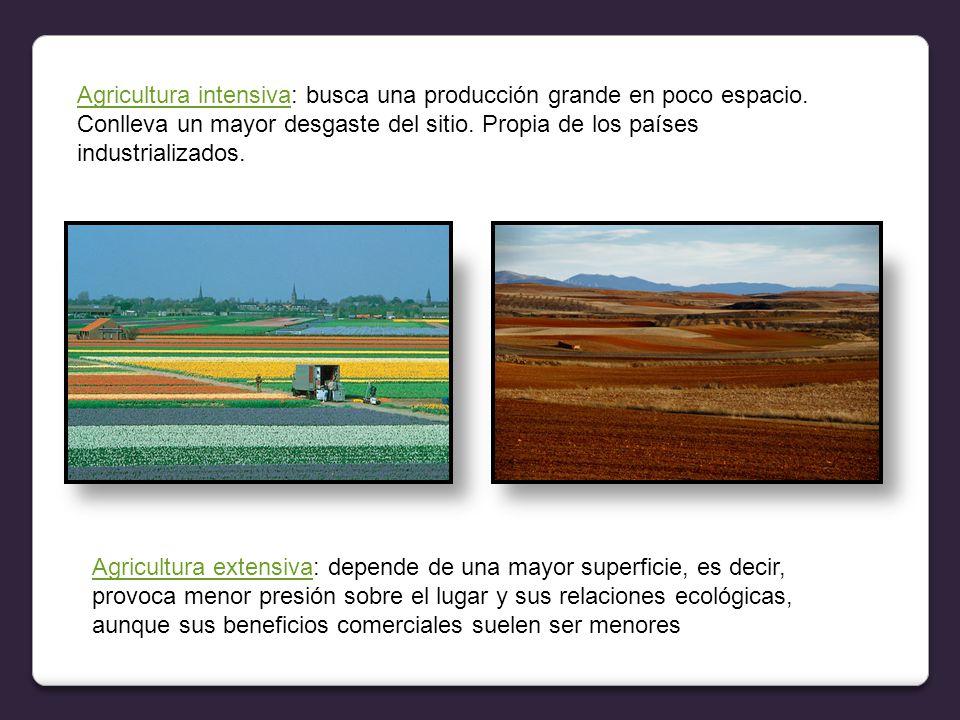 Agricultura intensiva: busca una producción grande en poco espacio