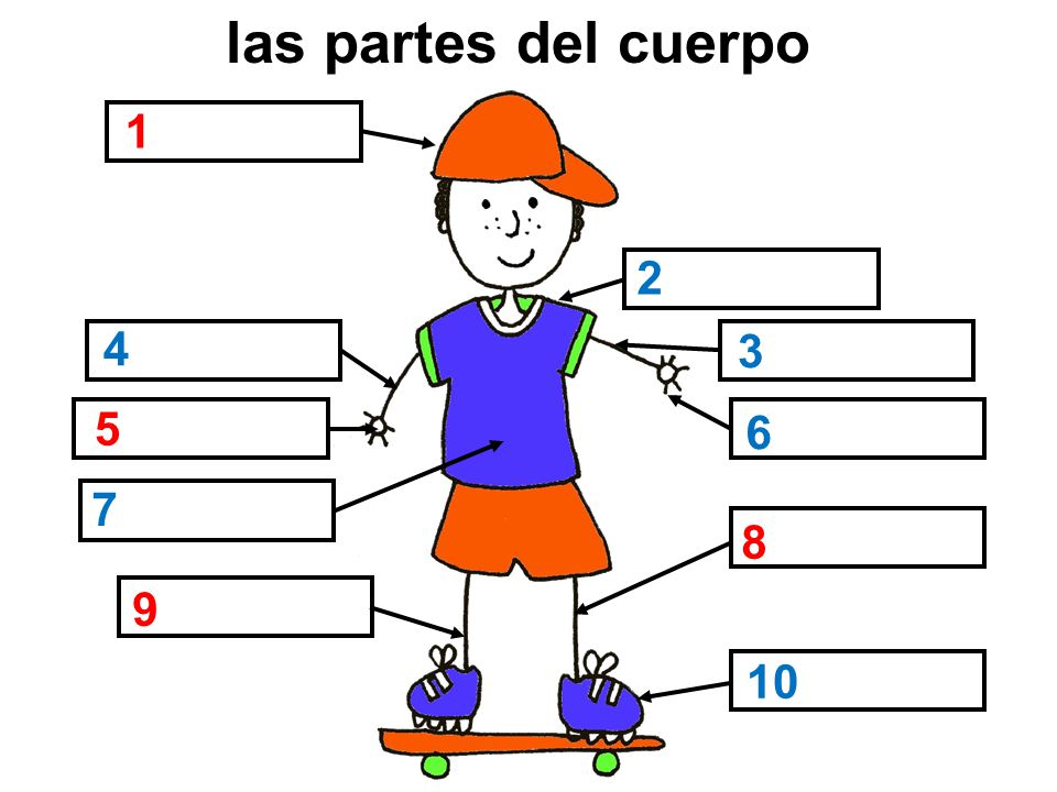 Las partes del cuerpo Ask pupils to name the parts of the body. The ...