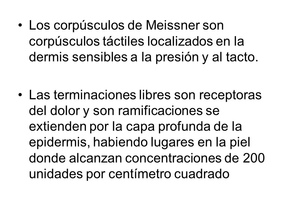 Los corpúsculos de Meissner son corpúsculos táctiles localizados en la dermis sensibles a la presión y al tacto.