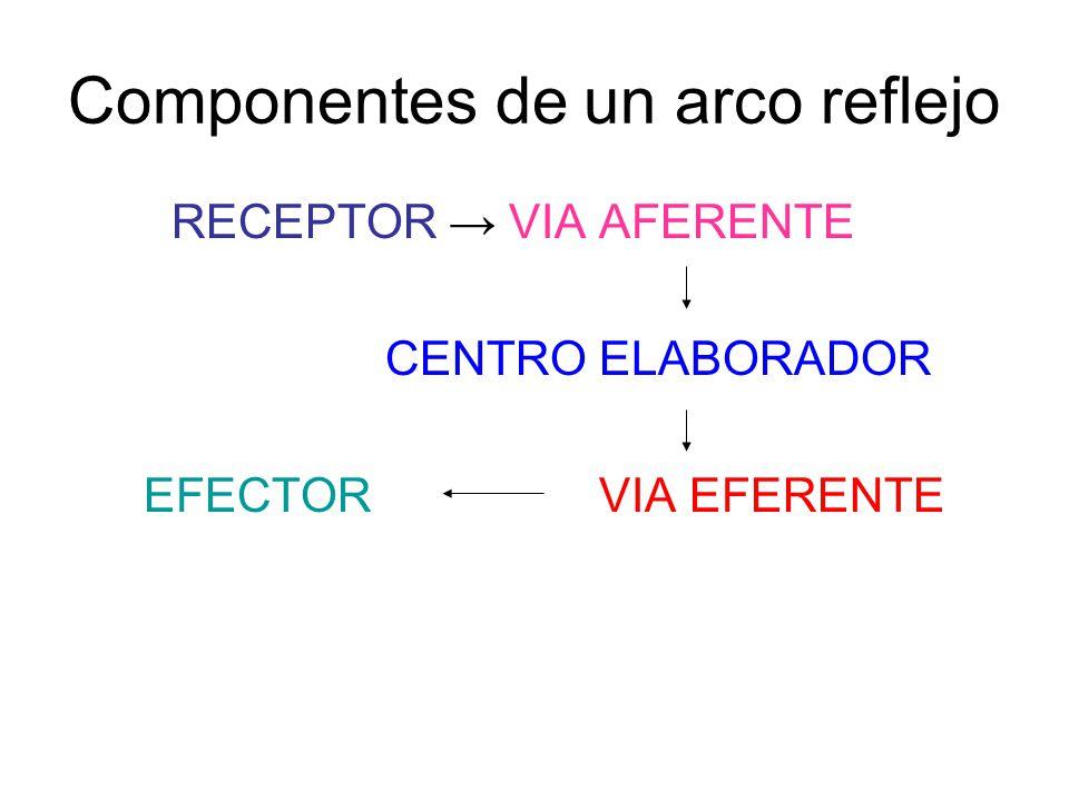 Componentes de un arco reflejo