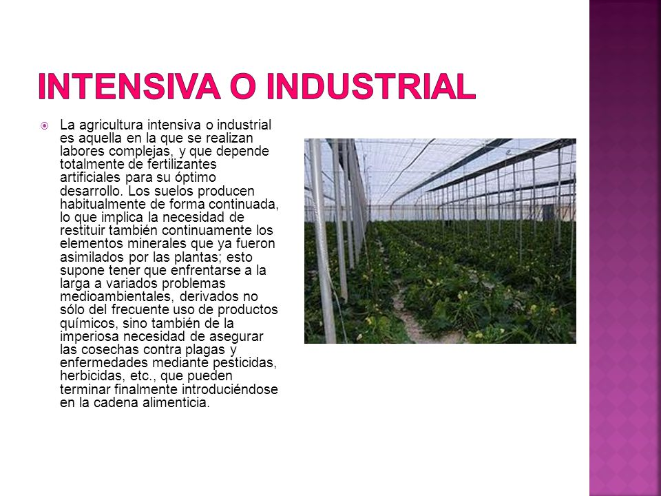 Intensiva o industrial