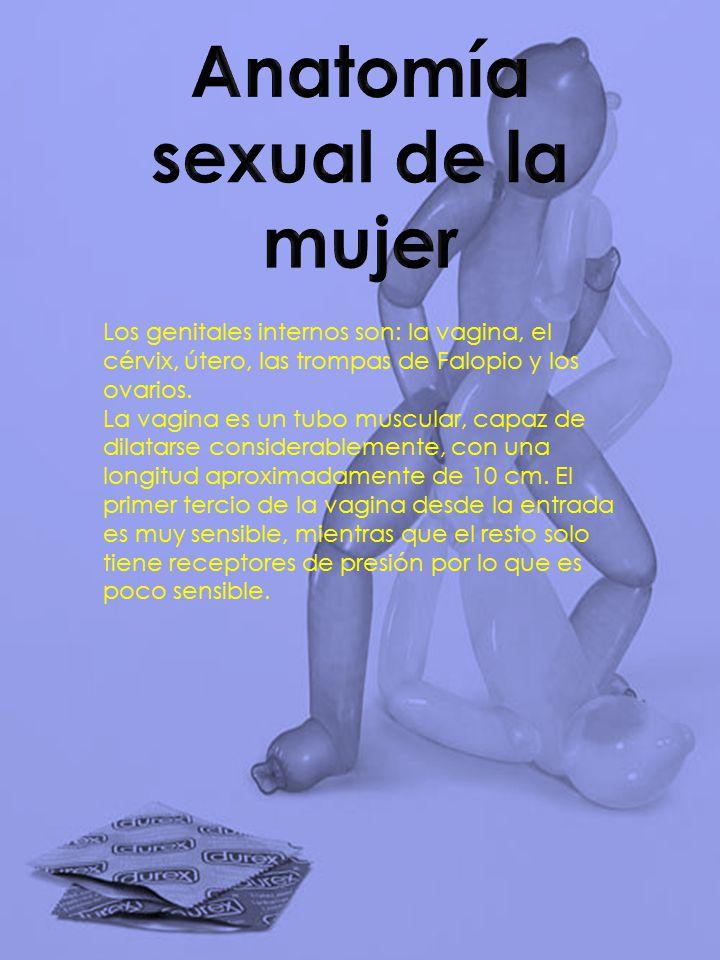 Contemporáneo Anatomía De La Mujer Vigina Composición - Imágenes de ...