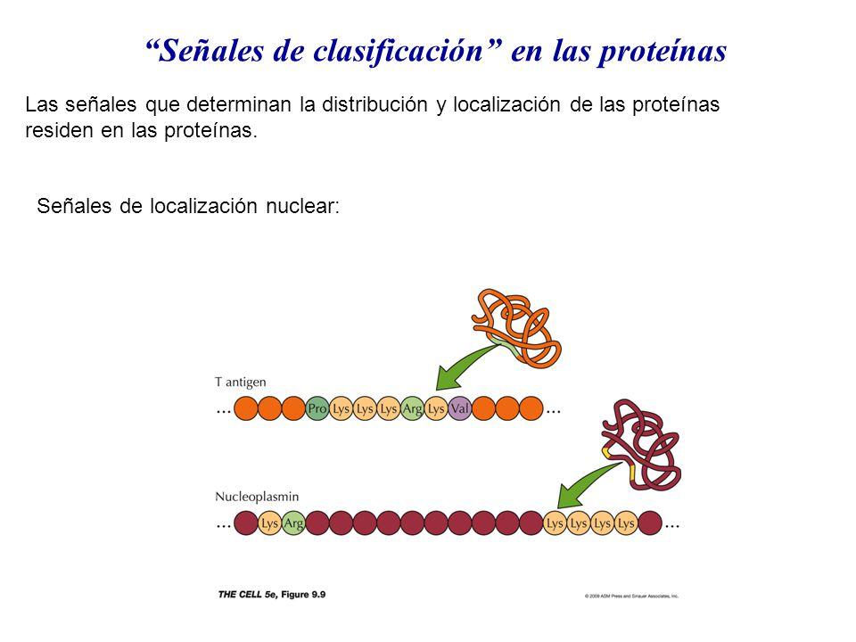 Señales de clasificación en las proteínas