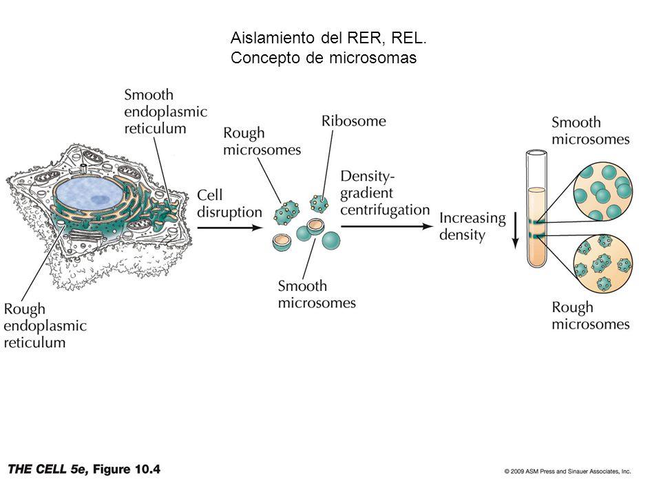 Aislamiento del RER, REL.