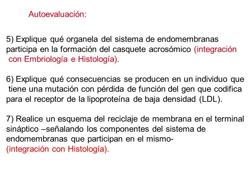 Autoevaluación: 5) Explique qué organela del sistema de endomembranas. participa en la formación del casquete acrosómico (integración.