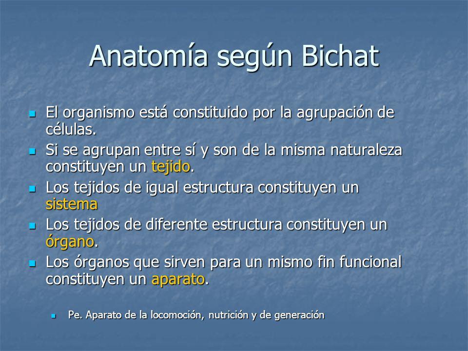 Anatomía según Bichat El organismo está constituido por la agrupación de células.