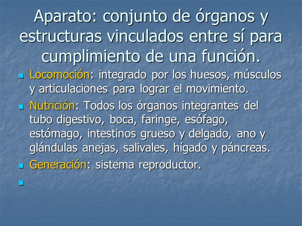 Aparato: conjunto de órganos y estructuras vinculados entre sí para cumplimiento de una función.
