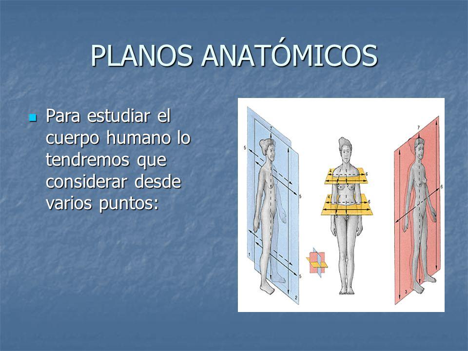 PLANOS ANATÓMICOS Para estudiar el cuerpo humano lo tendremos que considerar desde varios puntos: