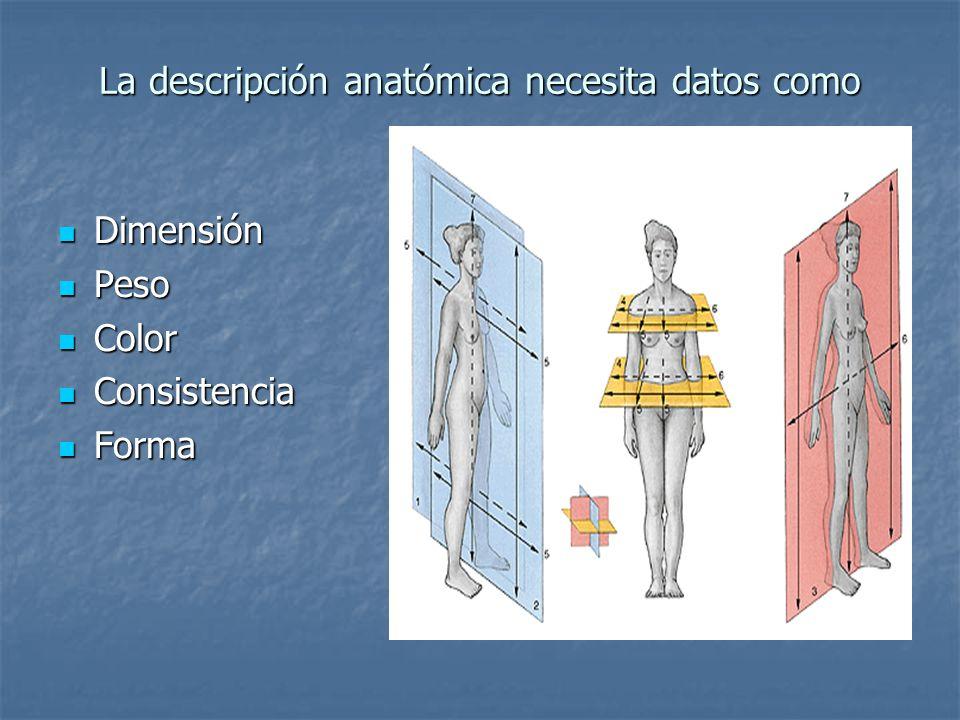 La descripción anatómica necesita datos como