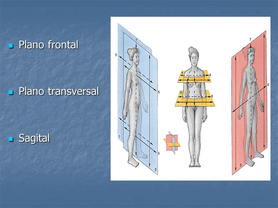 Plano frontal Plano transversal Sagital