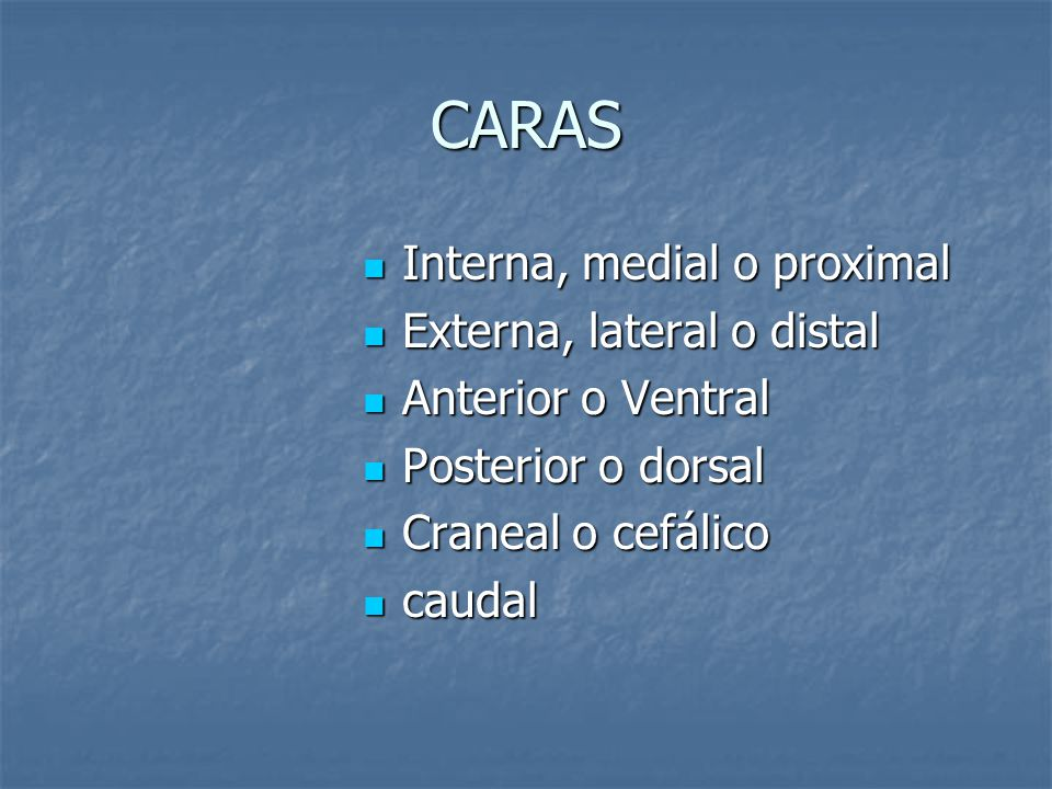 CARAS Interna, medial o proximal Externa, lateral o distal