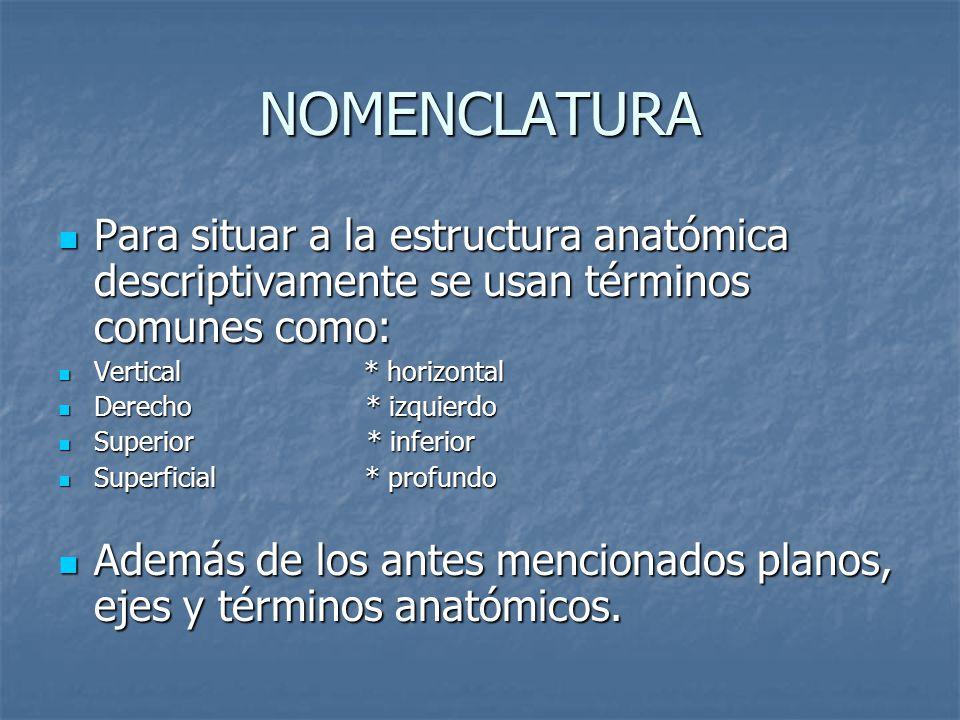 NOMENCLATURA Para situar a la estructura anatómica descriptivamente se usan términos comunes como: Vertical * horizontal.