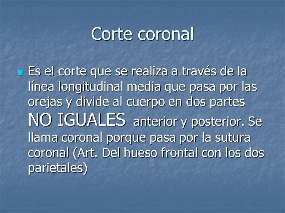 Corte coronal