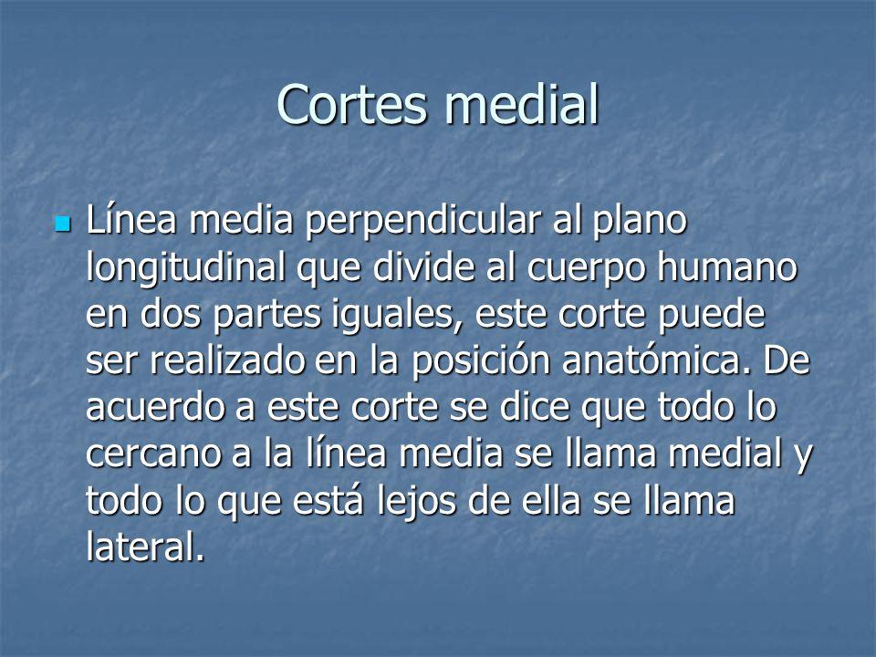 Cortes medial