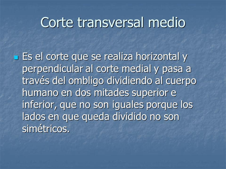 Corte transversal medio