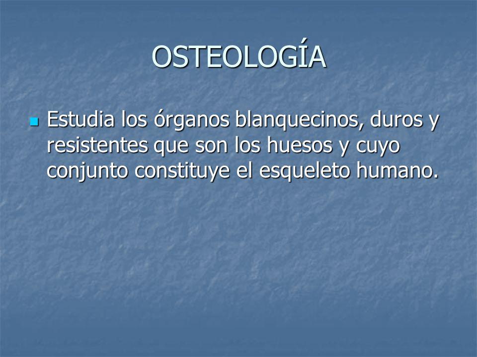 OSTEOLOGÍA Estudia los órganos blanquecinos, duros y resistentes que son los huesos y cuyo conjunto constituye el esqueleto humano.