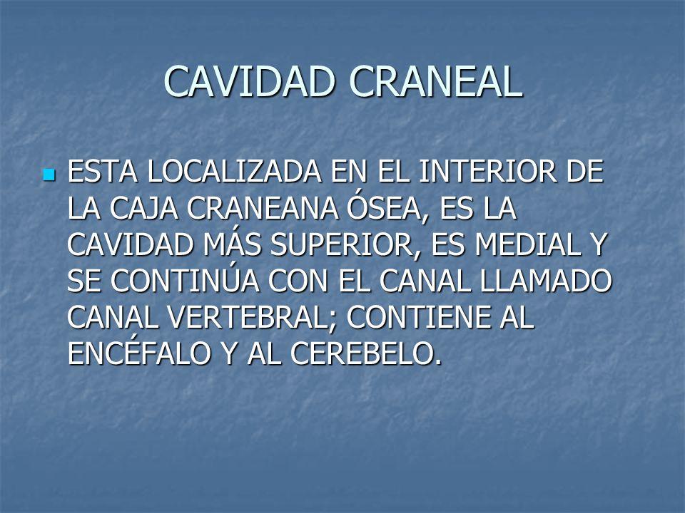 CAVIDAD CRANEAL