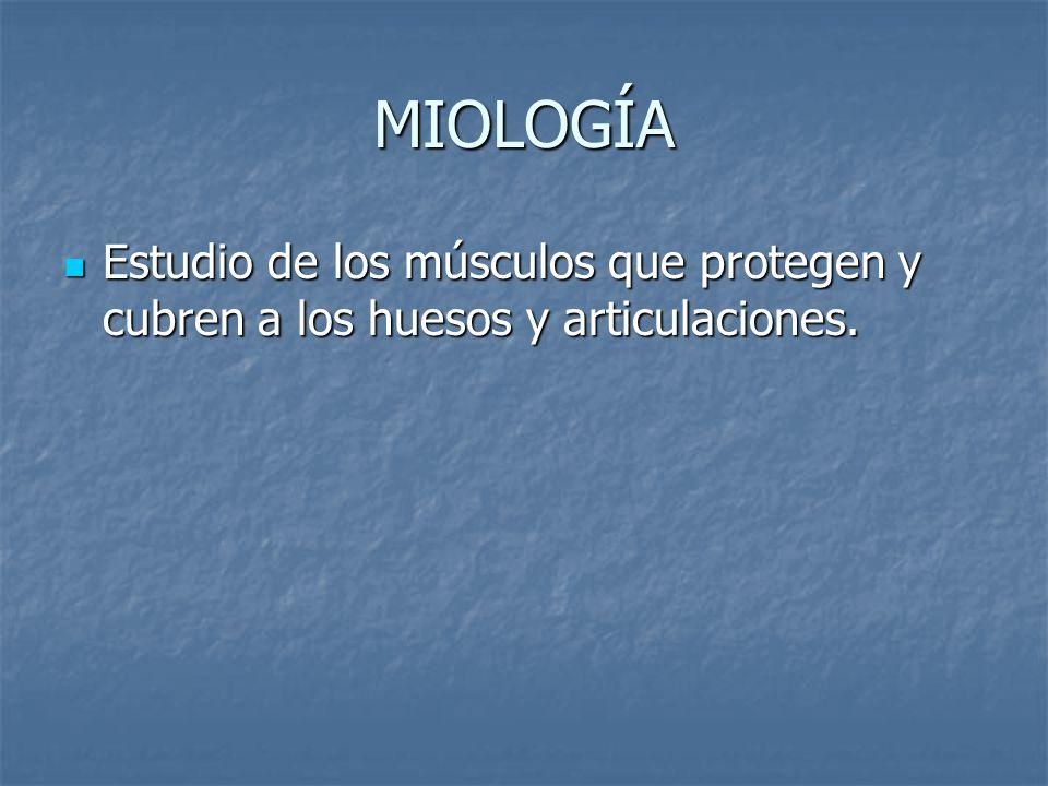MIOLOGÍA Estudio de los músculos que protegen y cubren a los huesos y articulaciones.