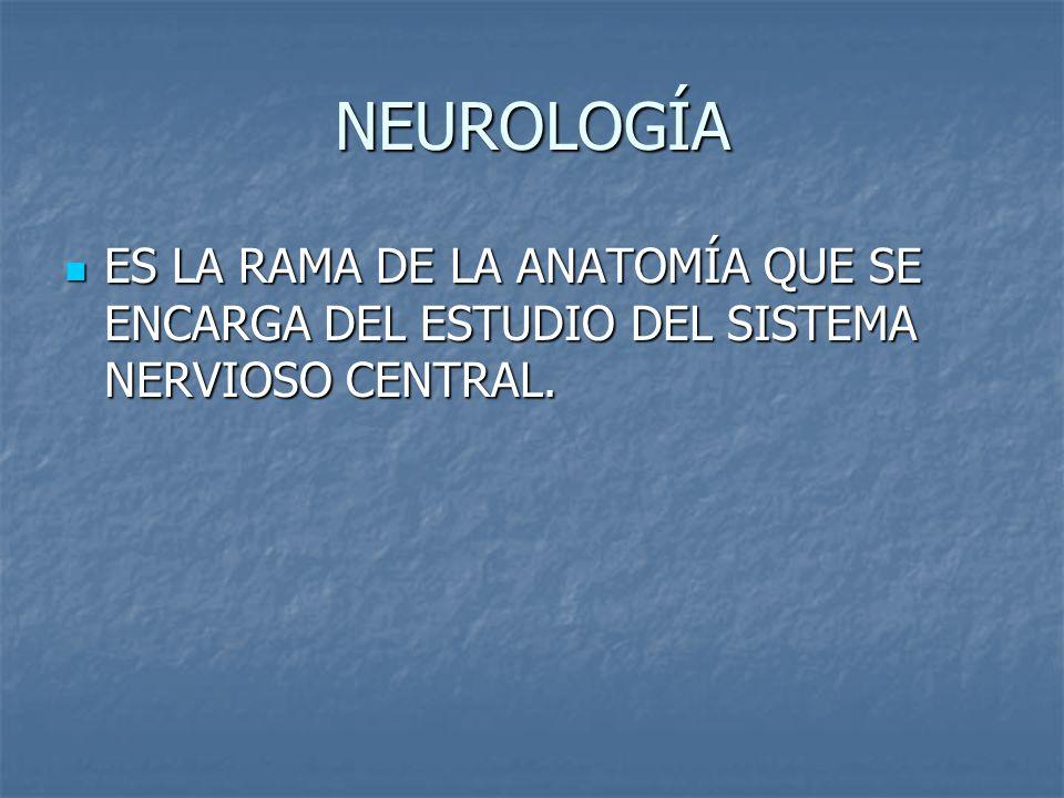 NEUROLOGÍA ES LA RAMA DE LA ANATOMÍA QUE SE ENCARGA DEL ESTUDIO DEL SISTEMA NERVIOSO CENTRAL.
