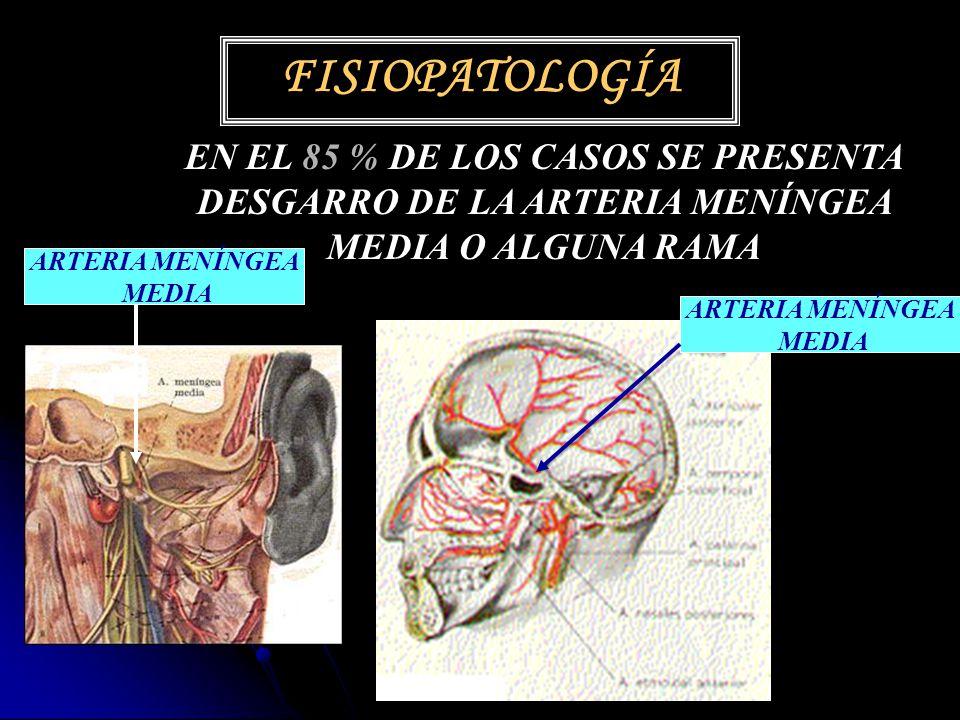 Increíble Anatomía De La Arteria Meníngea Media Ornamento - Imágenes ...