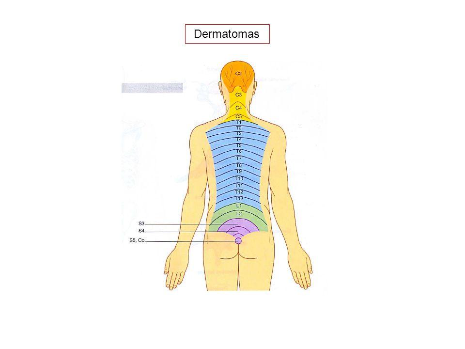 Fisiología II Fisioterapia: Semestre III - ppt descargar