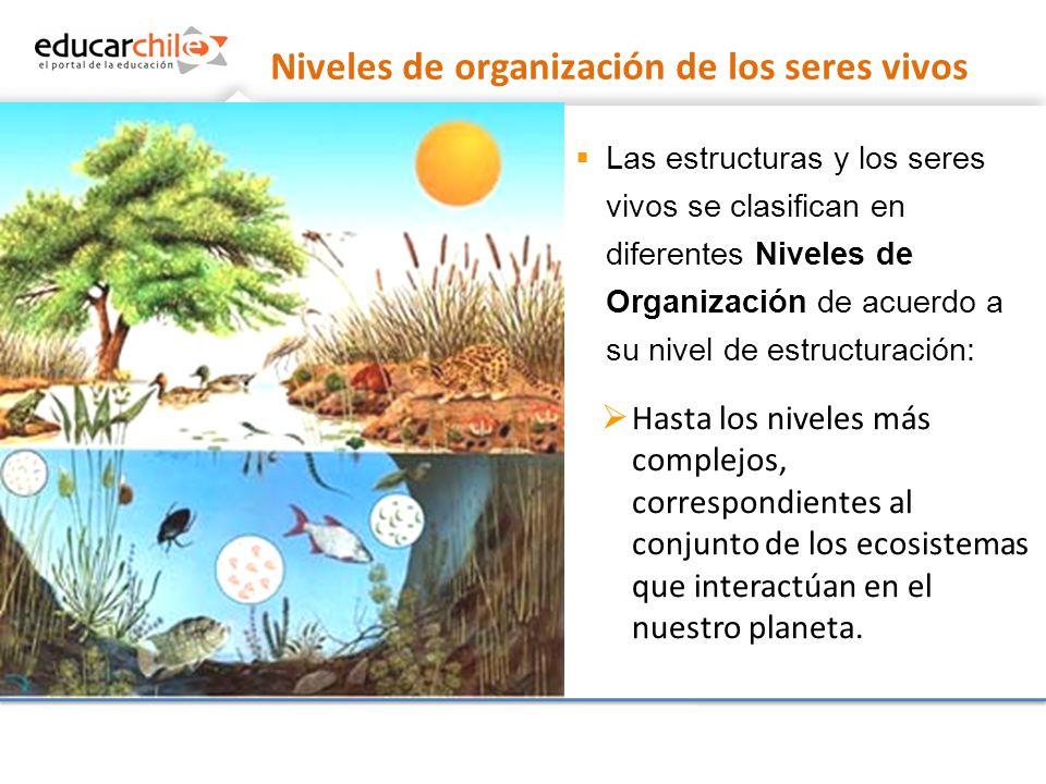 Niveles de organizaci n ppt descargar - Estructuras libros vivos ...