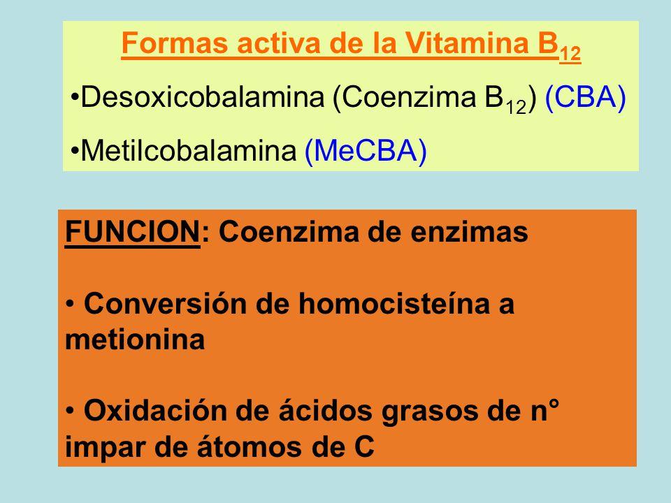 LIC. NUTRICIÓN – ANALISTA BIOLÓGICO QCA. BIOLÓGICA - ppt