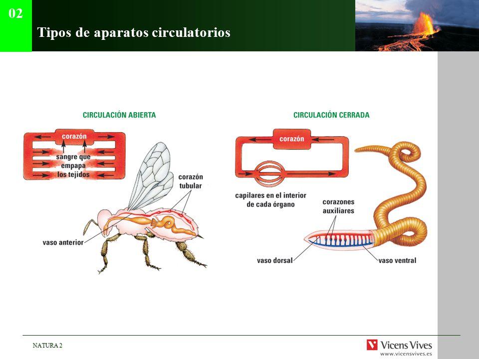 Tipos de aparatos circulatorios