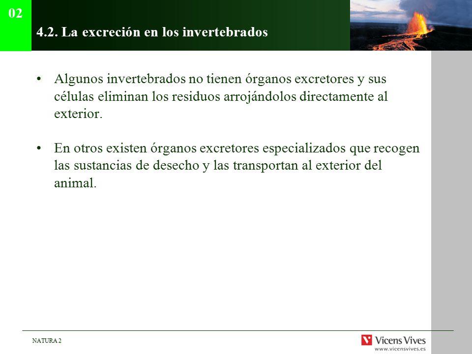 4.2. La excreción en los invertebrados