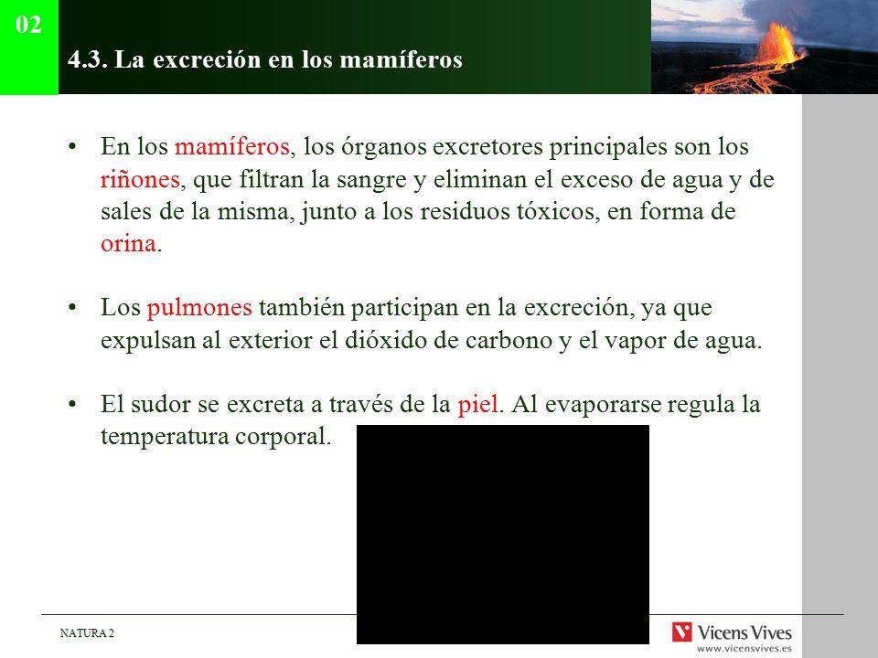 4.3. La excreción en los mamíferos