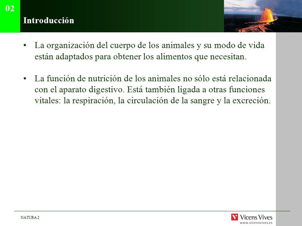 02 Introducción. La organización del cuerpo de los animales y su modo de vida están adaptados para obtener los alimentos que necesitan.
