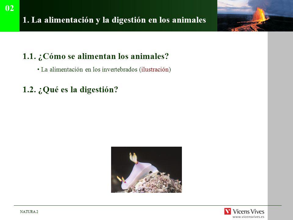 1. La alimentación y la digestión en los animales
