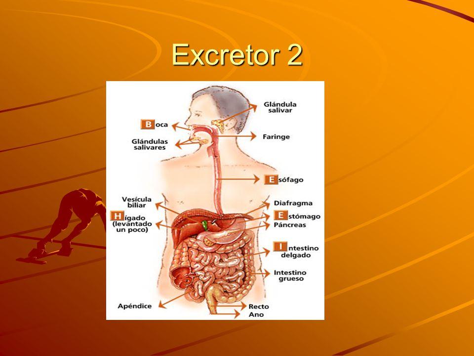 Excretor 2