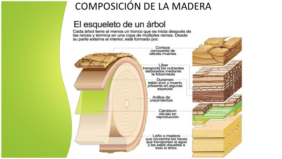 La madera la madera es un material de origen vegetal que for Que es la veta de la madera