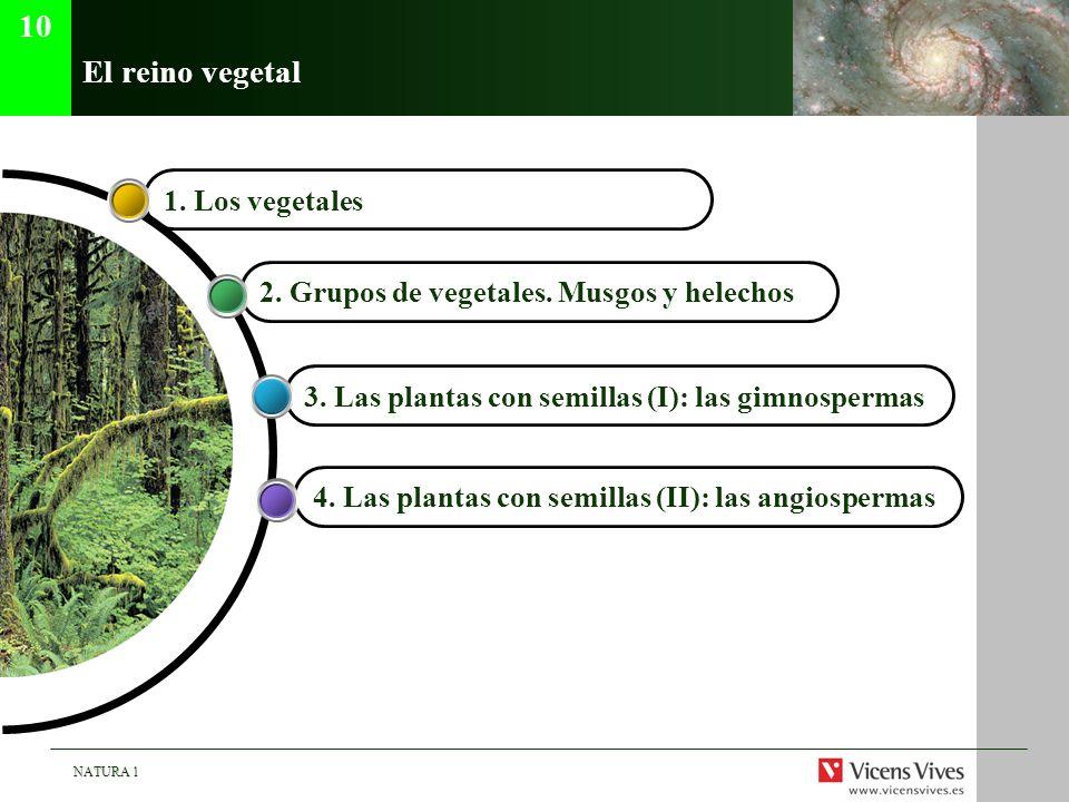 10 El reino vegetal 1. Los vegetales