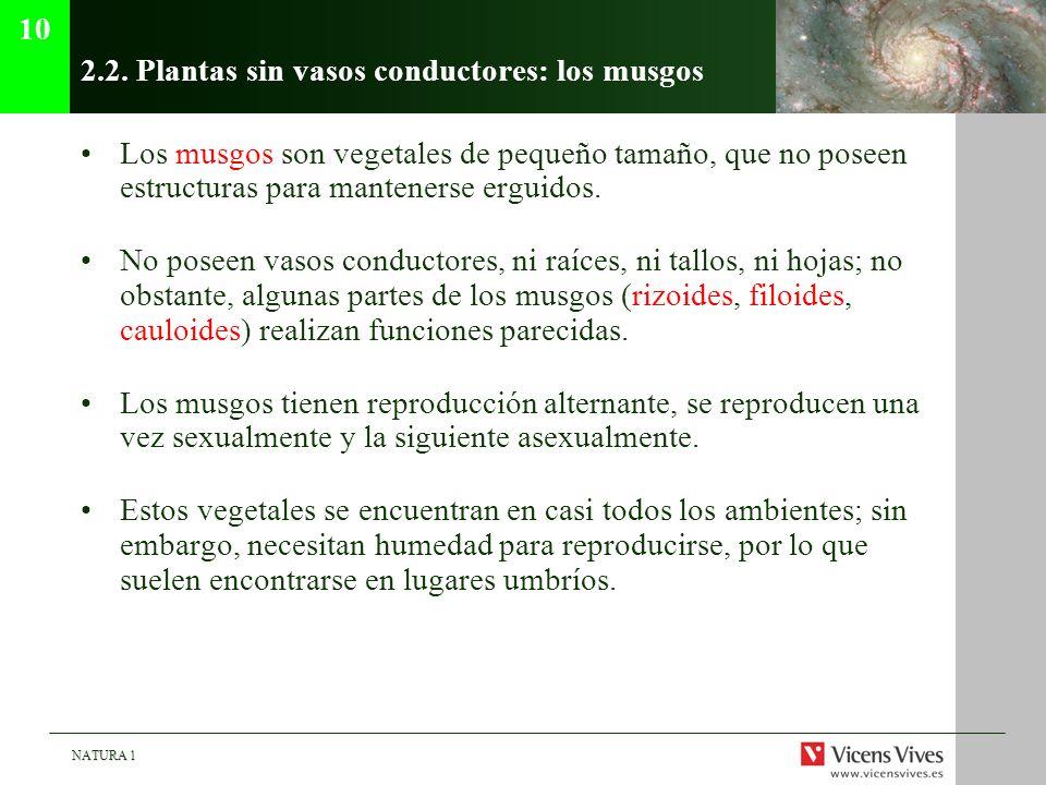 2.2. Plantas sin vasos conductores: los musgos
