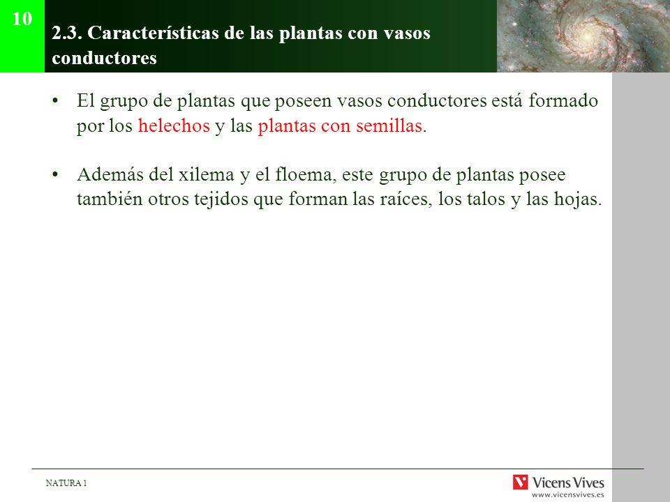 2.3. Características de las plantas con vasos conductores