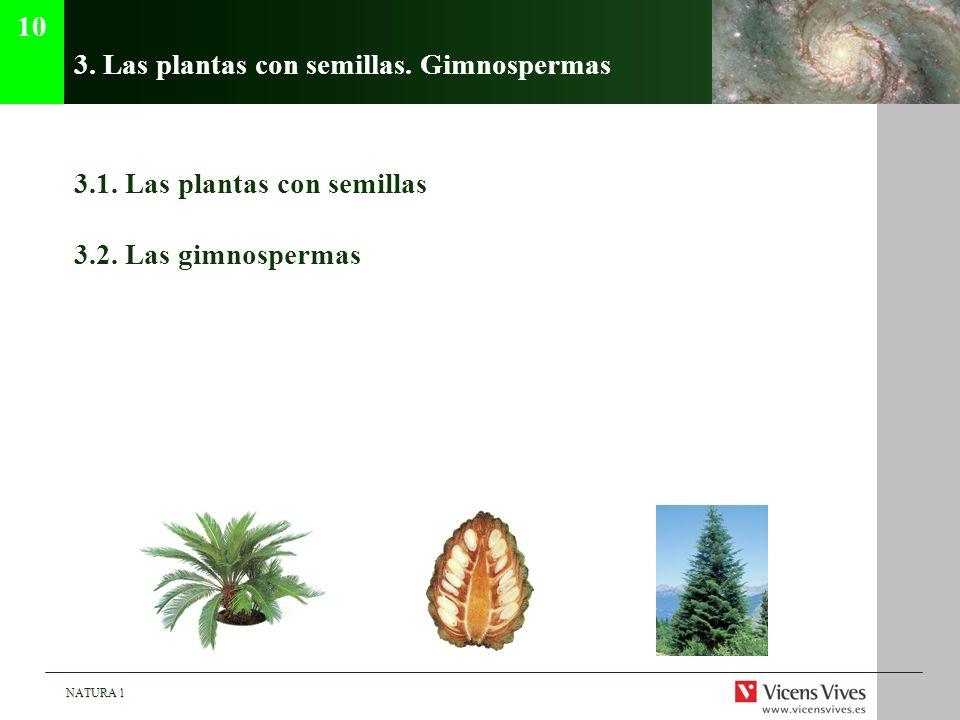3. Las plantas con semillas. Gimnospermas