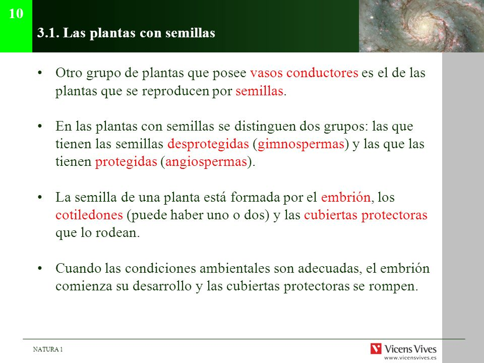 3.1. Las plantas con semillas