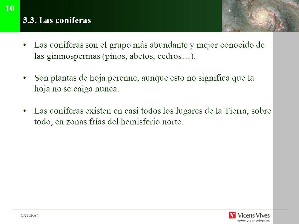 10 3.3. Las coníferas. Las coníferas son el grupo más abundante y mejor conocido de las gimnospermas (pinos, abetos, cedros…).