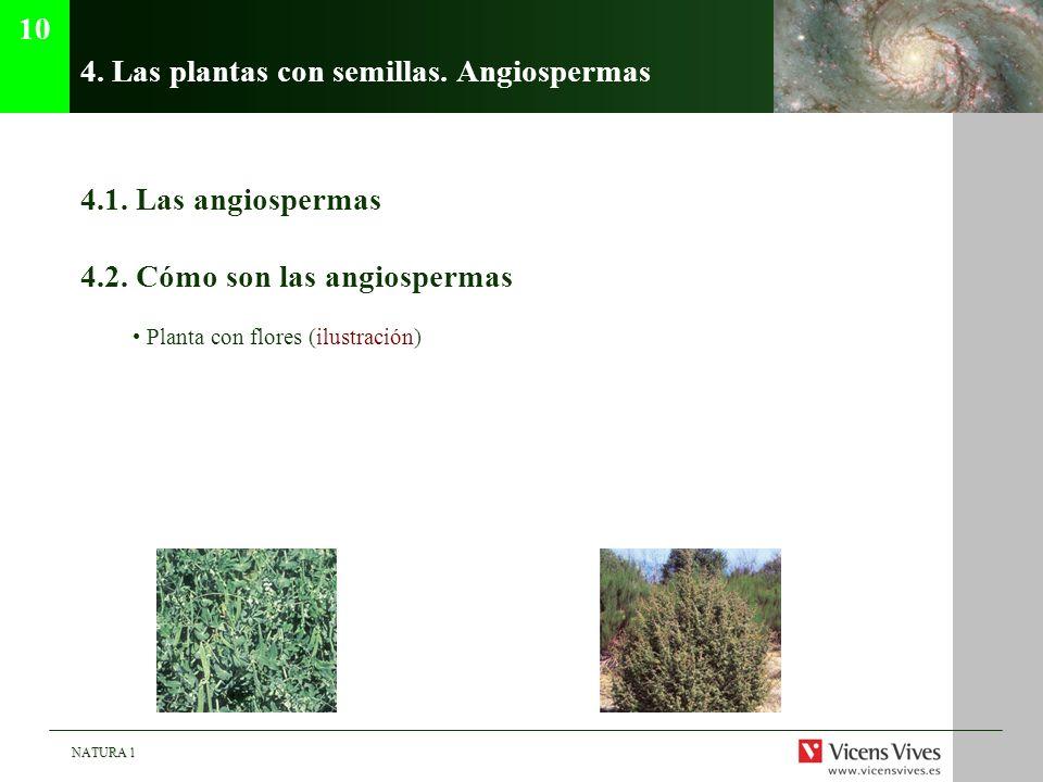 4. Las plantas con semillas. Angiospermas