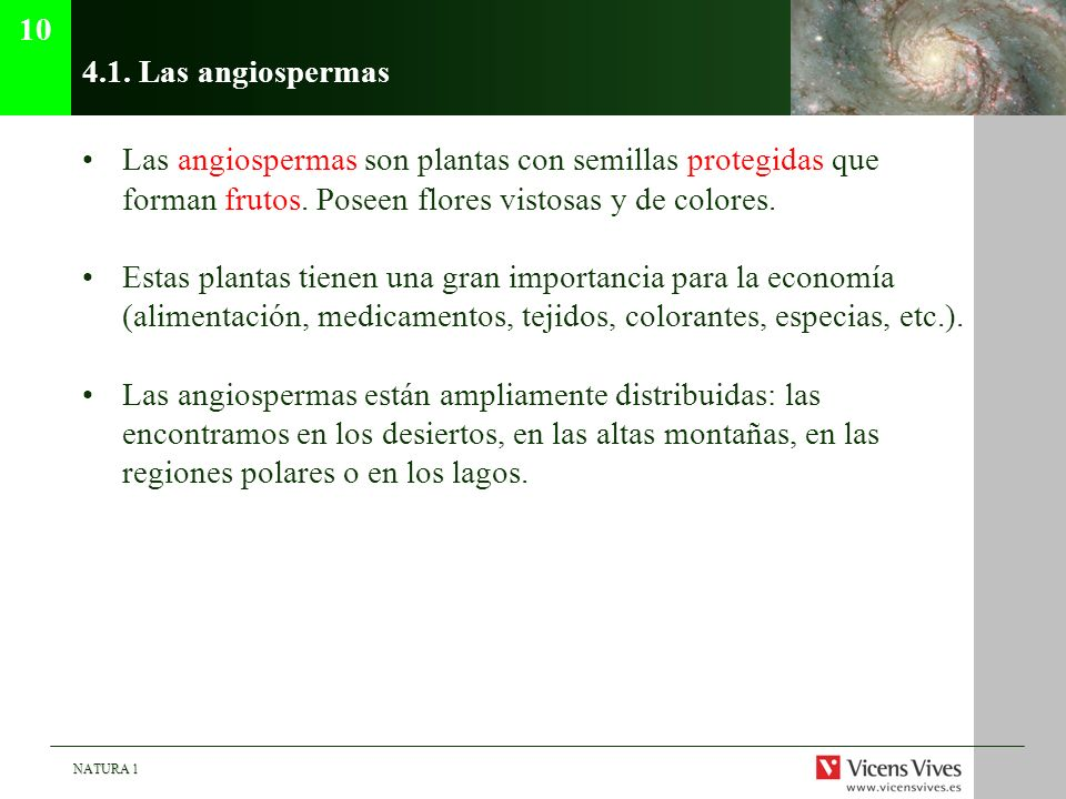 10 4.1. Las angiospermas. Las angiospermas son plantas con semillas protegidas que forman frutos. Poseen flores vistosas y de colores.