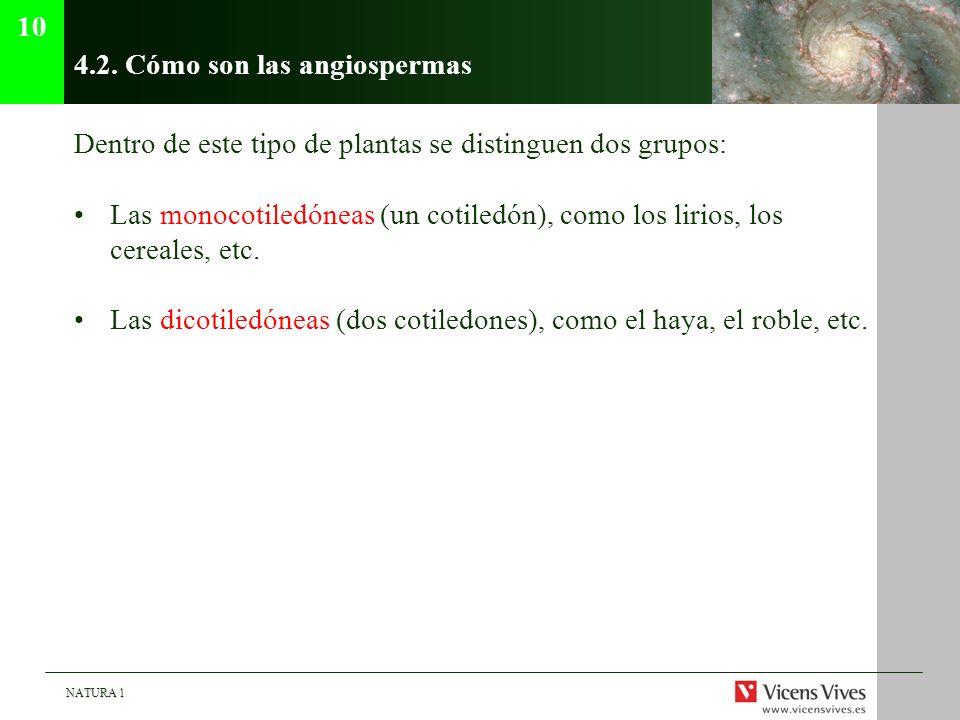 4.2. Cómo son las angiospermas