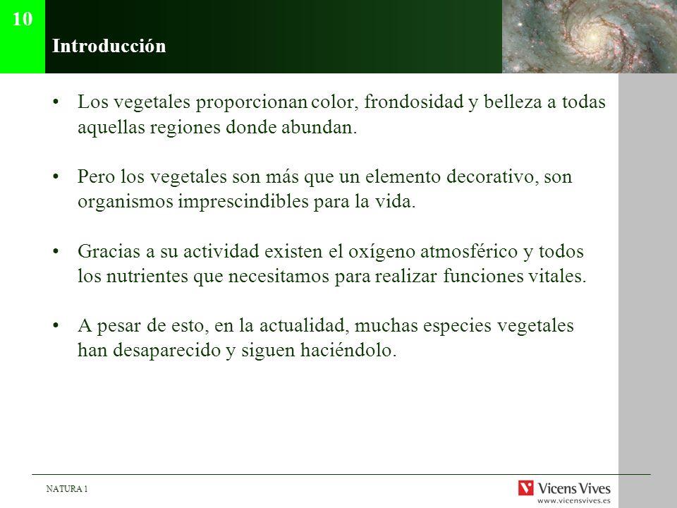 10 Introducción. Los vegetales proporcionan color, frondosidad y belleza a todas aquellas regiones donde abundan.