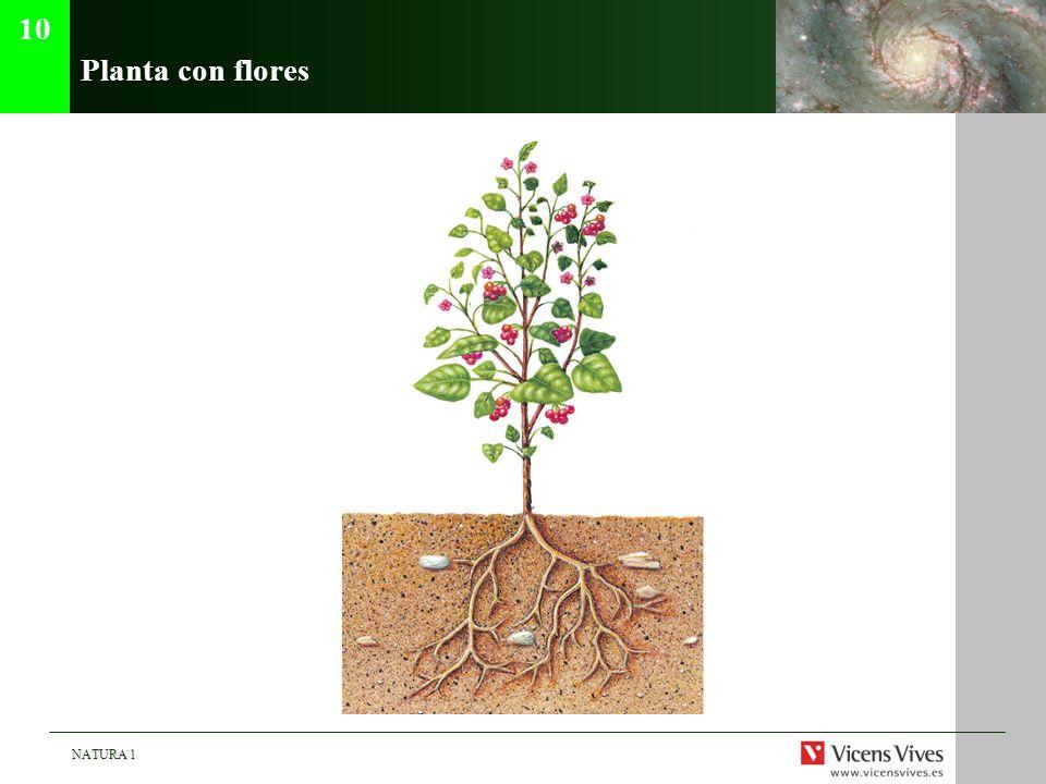 10 Planta con flores