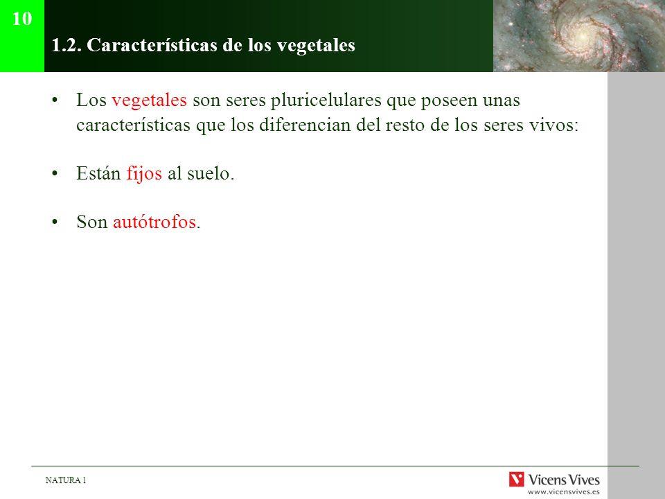 1.2. Características de los vegetales