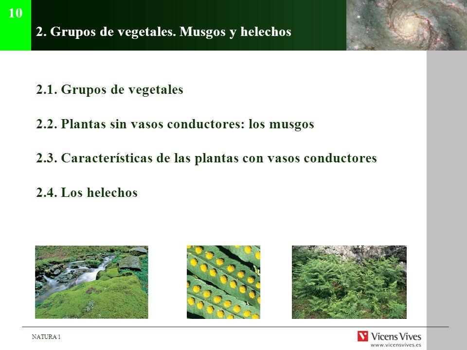 2. Grupos de vegetales. Musgos y helechos