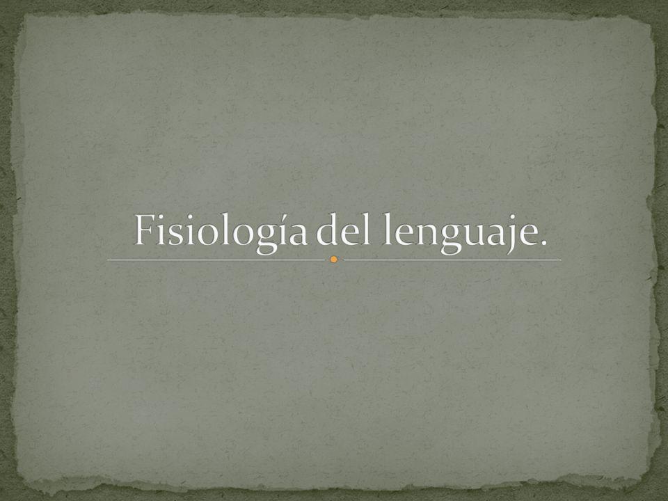 Fisiología del lenguaje.